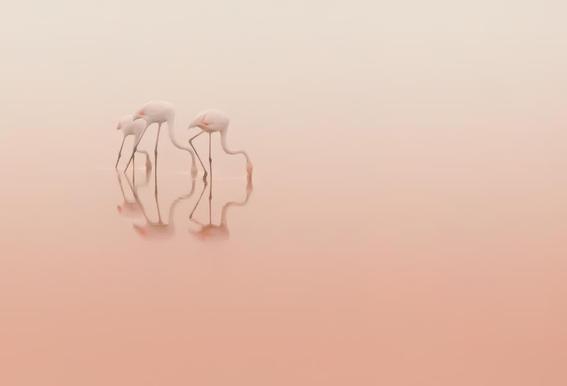 Pink Silence... - Natalia Rublina -Alubild