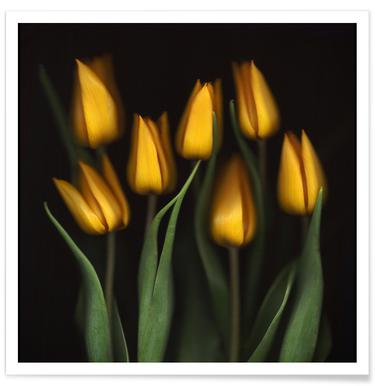 Tulips - Brian Haslam affiche