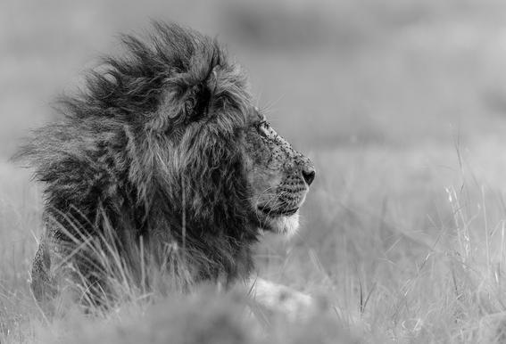 The King Is Alone - Massimo Mei tableau en verre