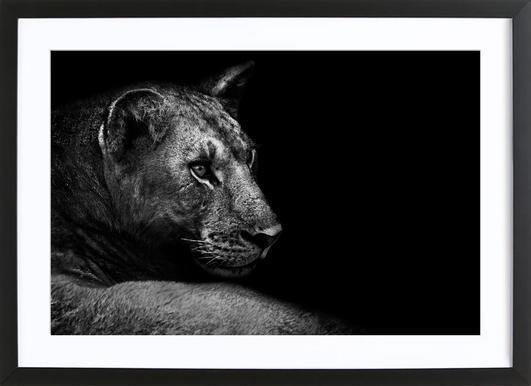 Lion - Wild Photo Art Framed Print