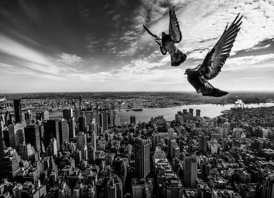 Pigeons on the Empire State Building - Sergiosousa Canvas Print