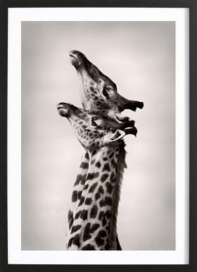 True Love - Wild Photo Art