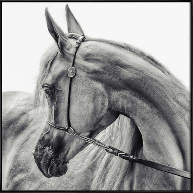 The Arabian Horse - Piet Flour affiche encadrée