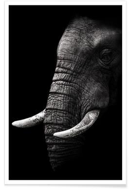 Portrait - Wild Photo Art affiche