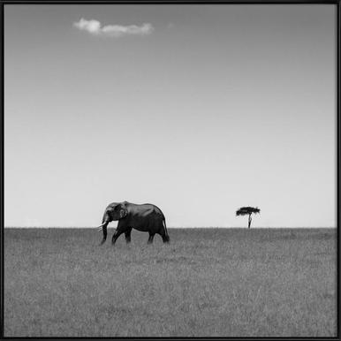 Elephant And The Friendly Cloud - Ali Khatatw