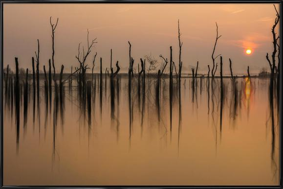 Drowned Forest - Piet Haaksma - Affiche sous cadre standard