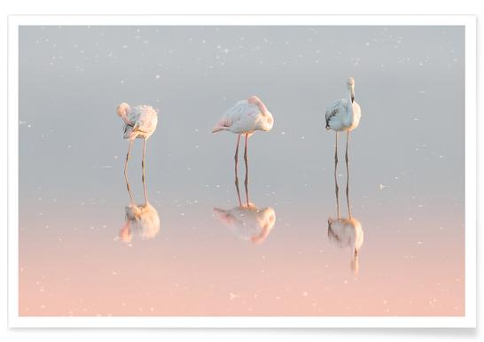 Three Flamingos - Natalia Rublina affiche