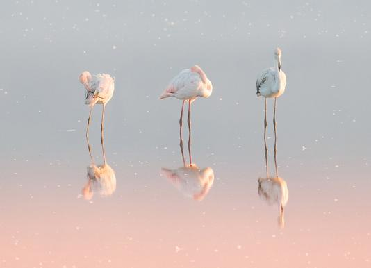 Three Flamingos - Natalia Rublina