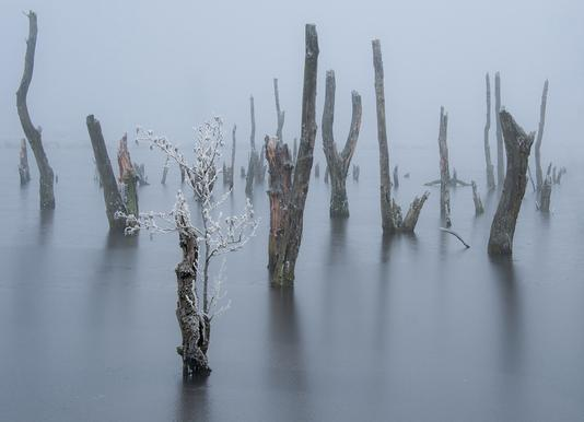 Frozen and Foggy World - Piet Haaksma