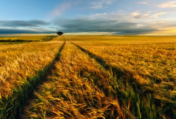 Countryside - Piotr Krol (Bax)