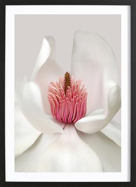 Magnolia - Brian Haslam