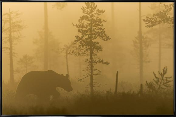 Morning Fog - Svein Ove Linde