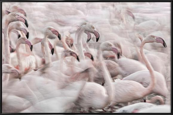 In The Pink Transhumance - Martine Benezech