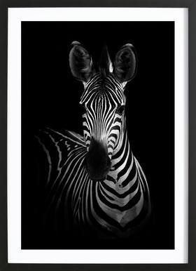 The Zebra - Wildphotoart