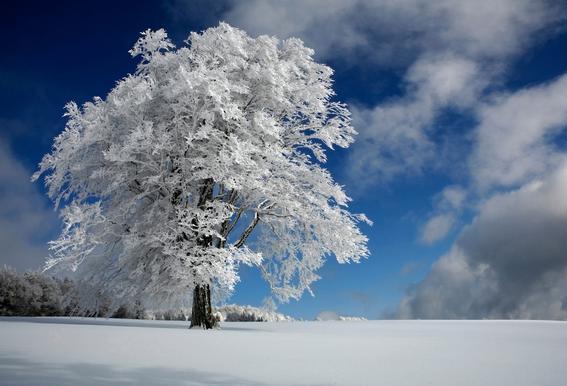In Black Forest - Nicolas Schumacher