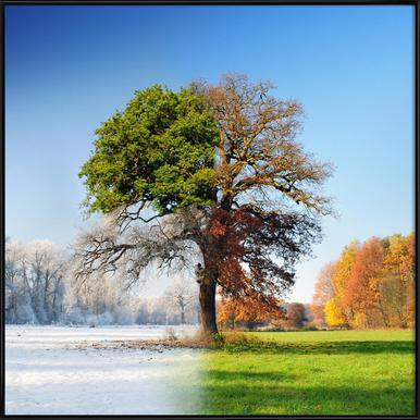 Four Seasons - Adam Brzuszek