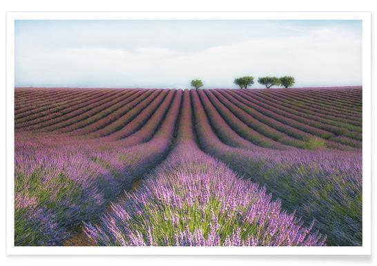 Velours De Lavender - Margarita Chernilova -Poster