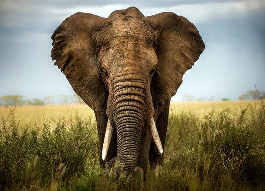 Encounters in Serengeti - Alberto Ghizzi Panizza