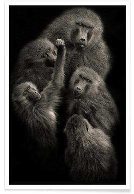"""Baboons """" UNITED """" - Mario Moreno"""