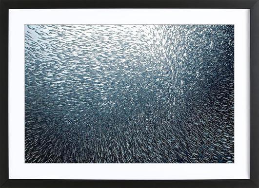 Sardines Firework - Henry Jager