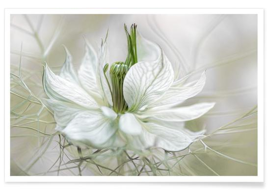 Nigella - Mandy Disher