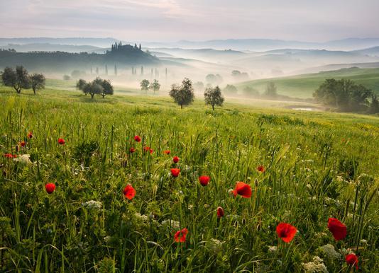 Tuscan Spring canvas doek