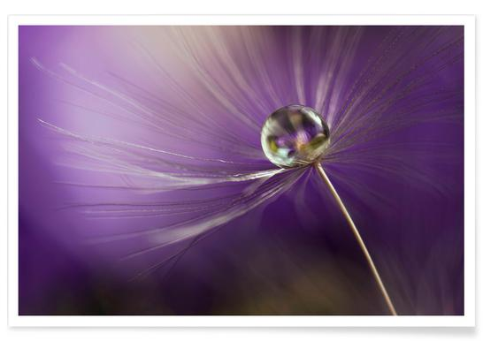 In Shades of Purple