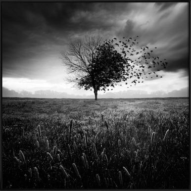 Illusion d'un printemps perdu ingelijste poster