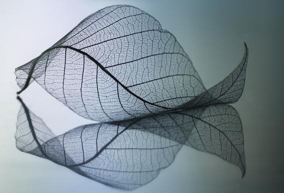 Curvaceousness acrylglas print