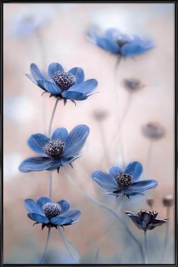 Cosmos blue Framed Poster