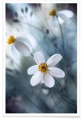 Cosmos - Mandy Disher