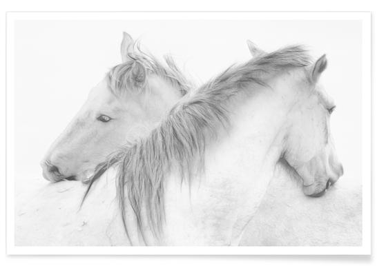 Horses - Marie-Anne Stas
