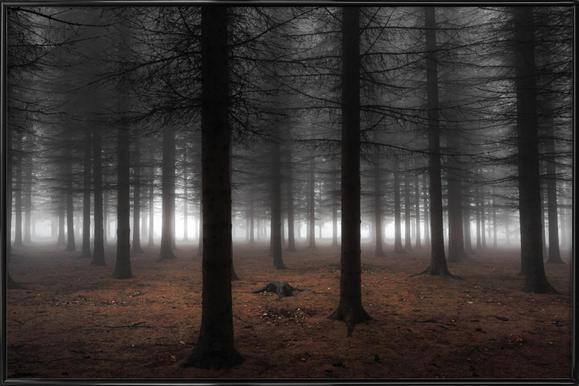 Silence - Dragisa Petrovic