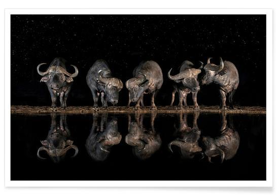 Buffaloes in the Waterhole at Night - Xavier Ortega