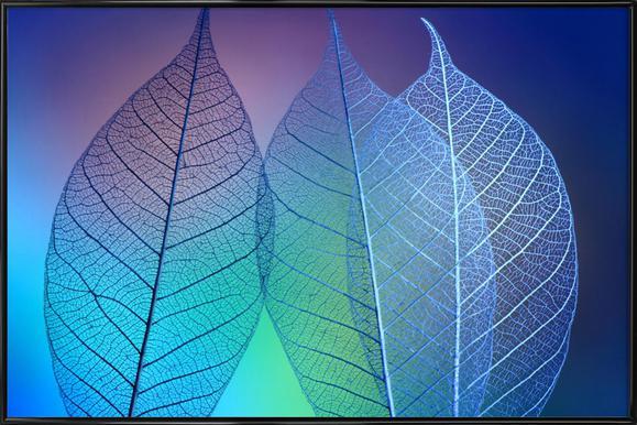 Prismatic Leaves - Shihya Kowatari