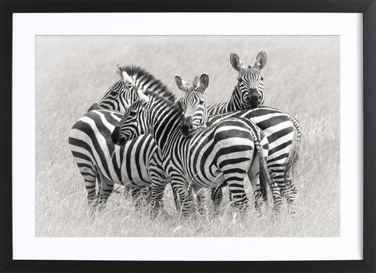 Zebras - Kirill Trubitsyn Framed Print