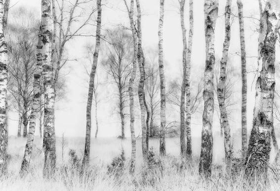 Black And White - Nel Talen acrylglas print