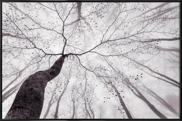 A View Of The Tree Crown - Tom Pavlasek -Bild mit Kunststoffrahmen