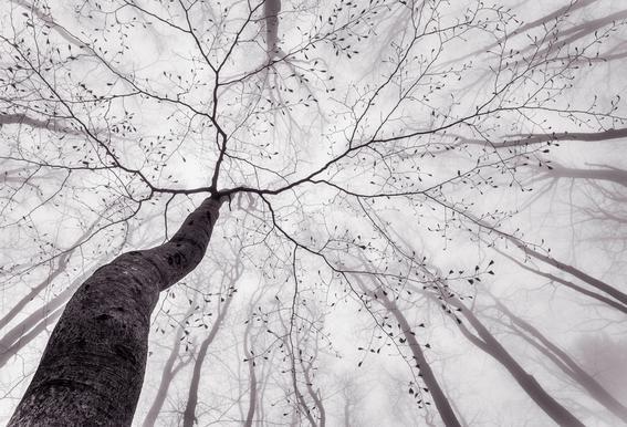 A View Of The Tree Crown - Tom Pavlasek