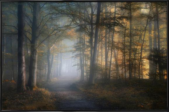 Autumn Symphony - Norbert Maier ingelijste poster
