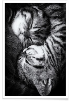 Affiches de chats et posters en ligne