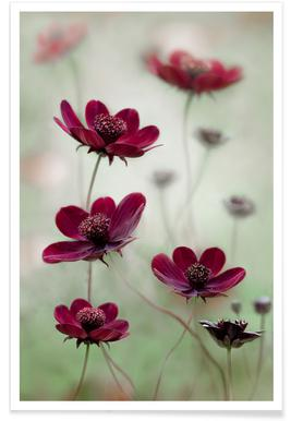 Cosmos Sway - Mandy Disher poster