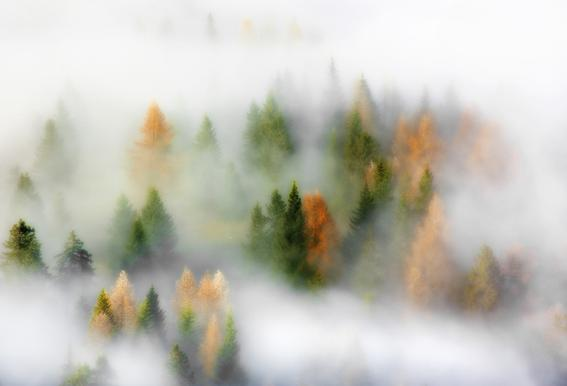 Autumn Dream - Kristjan Rems Impression sur alu-Dibond