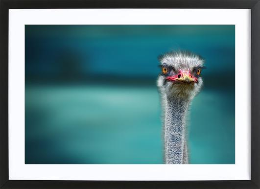Ostrich Protecting Two Poor Chicken from the Wind - Piet Flour Framed Print