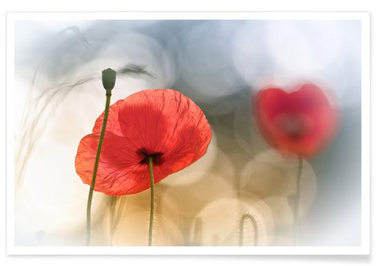 Morning Poppies - Steve Moore poster