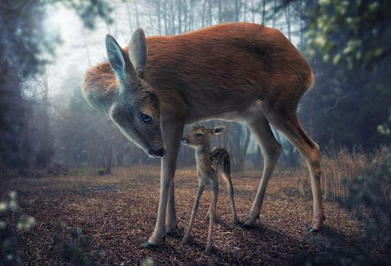Mother and Fawn - John Wilhelm Acrylic Print