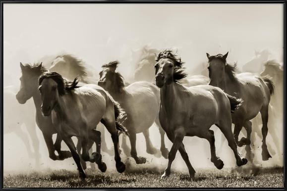 Horse - Heidi Bartsch ingelijste poster