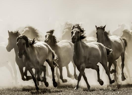 Horse - Heidi Bartsch canvas doek