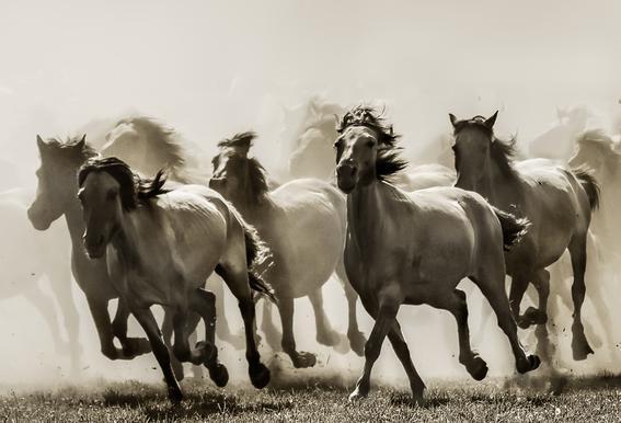 Horse - Heidi Bartsch Aluminium Print