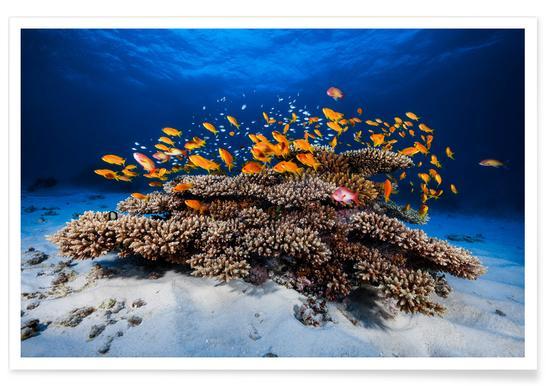 Marine Life - Barathieu Gabriel Poster